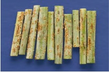 Fig. 6: Samples of stem rust from wheat fields.